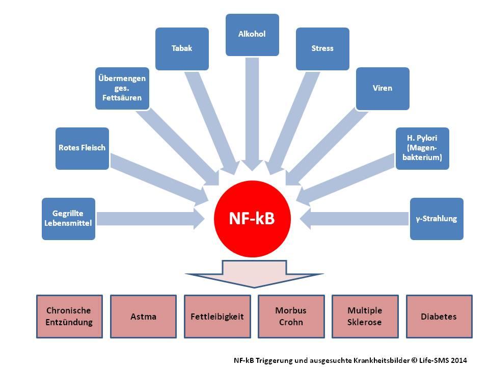 Chronische Entzündung und NF-kB
