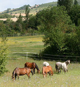 Foto der Pferdewiese auf Sabrines Farm