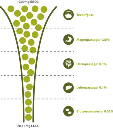 Grafik von tigovit: EGSG-Aufnahme in verschiedenen Stadien der Verdauung