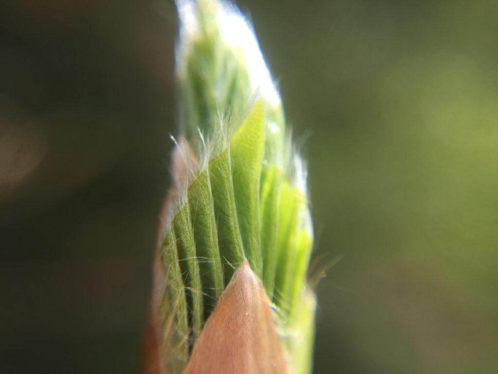 Foto einer Pflanzenknospe
