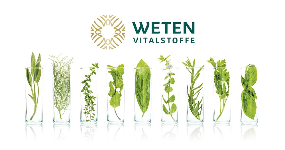 Foto mit Pflanzen in Reagenzglas bei Weten Vitalstoffe