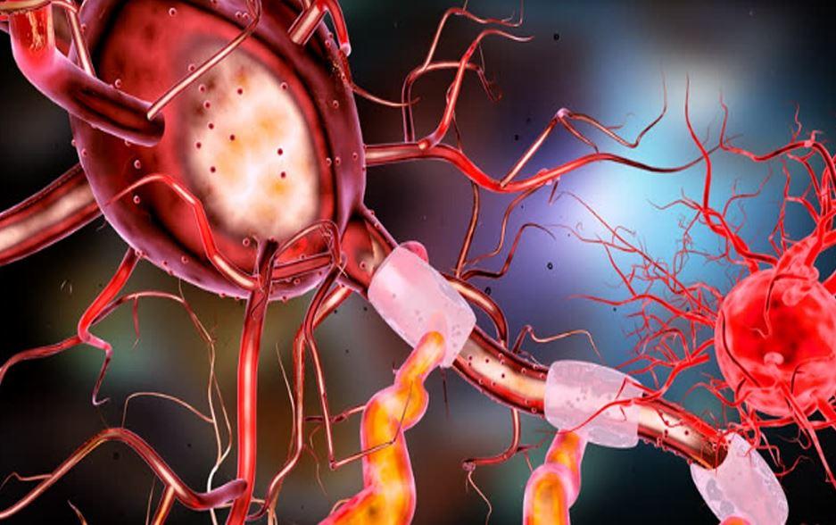 Neurone Gehirn