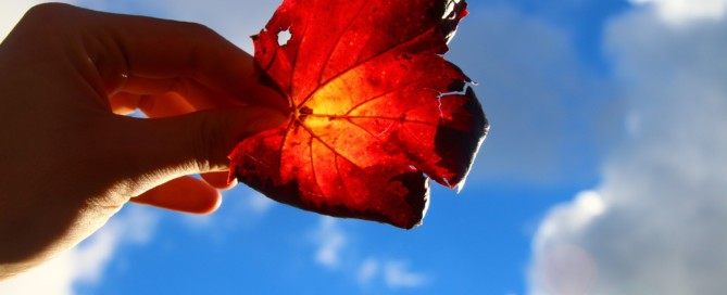 Ein Ahornblatt wird in den Himmel gehalten